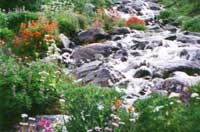 Many varieties along a rushing, glacier fed creek