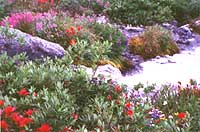 Incredible array of wildflowers along a glacier stream at 7000 ft.
